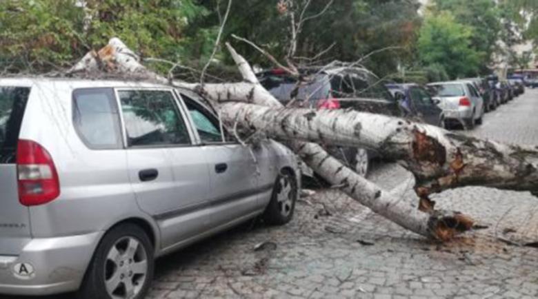 Дърво премаза паркиран автомобил край болница в София