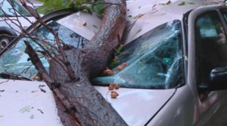 Голямо дърво падна върху две коли в Пловдив