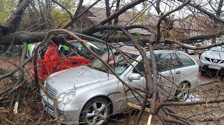 Дърво падна и потроши четири автомобила
