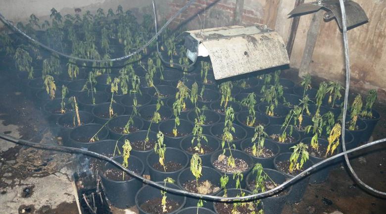 Пожар разкри наркооранжерия край Панагюрище! Арестуваха собственика