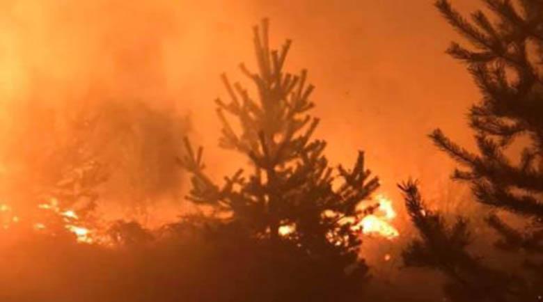Запали се балканът над Трявна