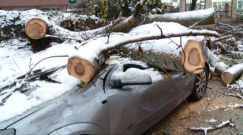 Oгрoмнo дърво размаза автомобил в Пловдив