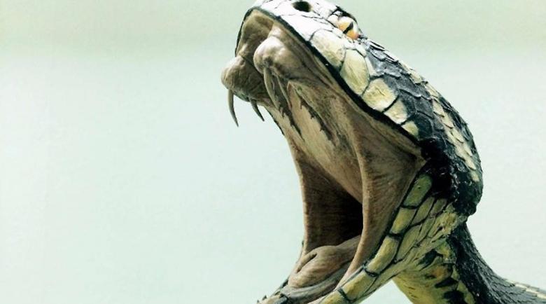 Мъж гледа опасно отровни змии в Асеновград, съседите му викнаха екоинспектори