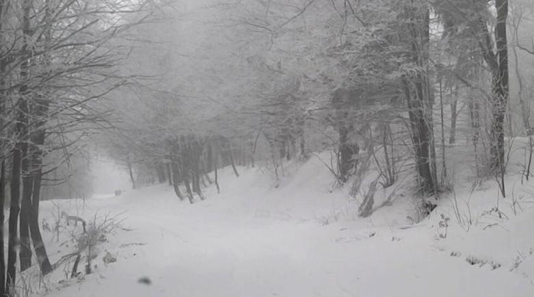 20 сантиметра сняг ни чака в края на седмицата