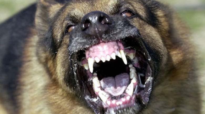Бездомно куче нападна дете в София, захапа крака му