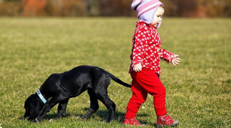 На Великден: Изрод застреля куче в Бургас, докато си играе с дете