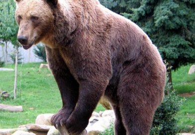 Пиян посетител на зоопарка във Варшава мери сили с мечка