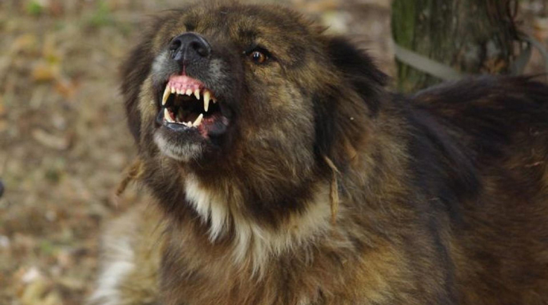Кошмар: Огромно куче нахапа зверски пенсионер