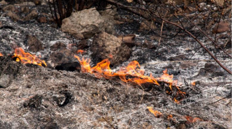 Спасиха 200 крави от пожар в Симеоновградско