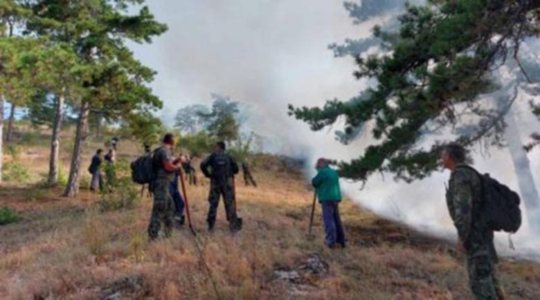 Големи горски пожари бушуват из Хасковско
