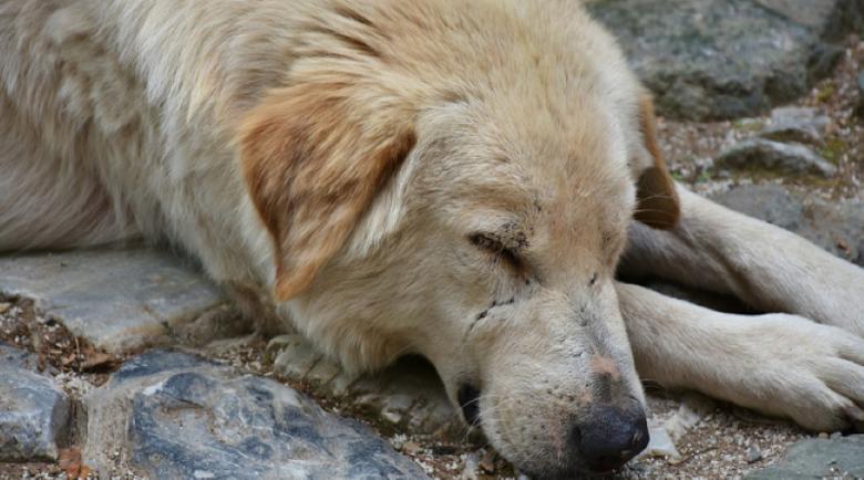 Обвиниха 68-годишна за убийството на две кучета