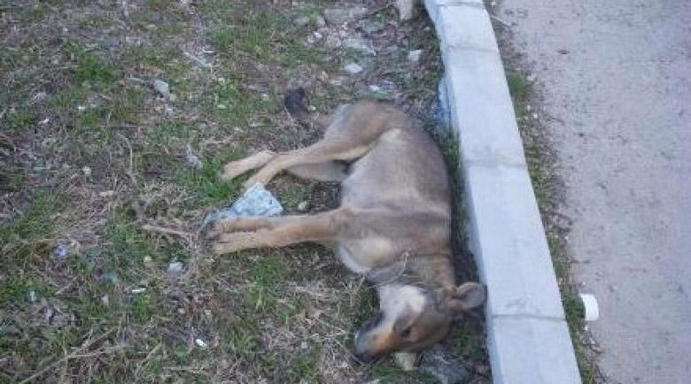 Тровят кучета със син прах в бургаски квартал