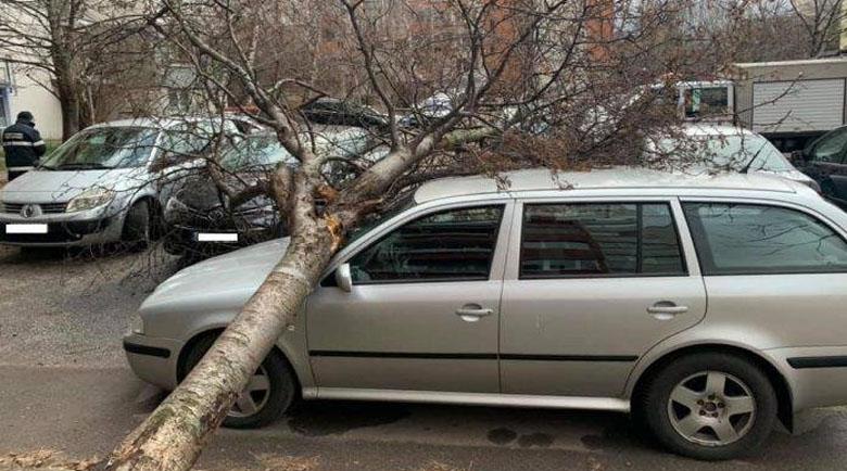 """Дърво падна върху автомобил в столичния квартал """"Белите брези"""""""