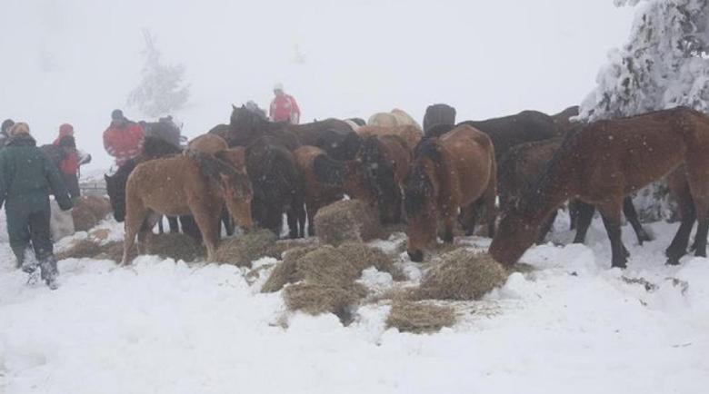 4500 лв. глоба за фермера, оставил конете си да измират в Осоговската планина