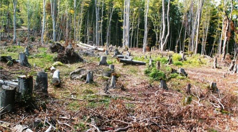 Дървената мафия изкарва по 100 млн. лева на година